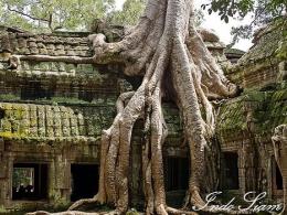 Ta Prohm, Cambodge