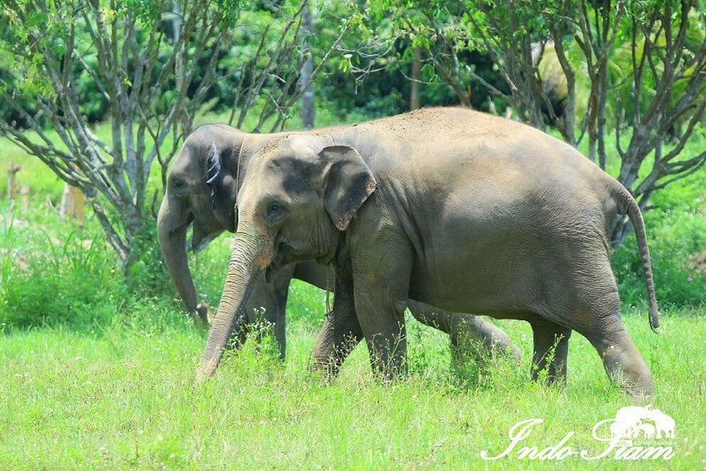 Kanta Elephant Sanctuary