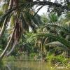 Canal, Tha Kha